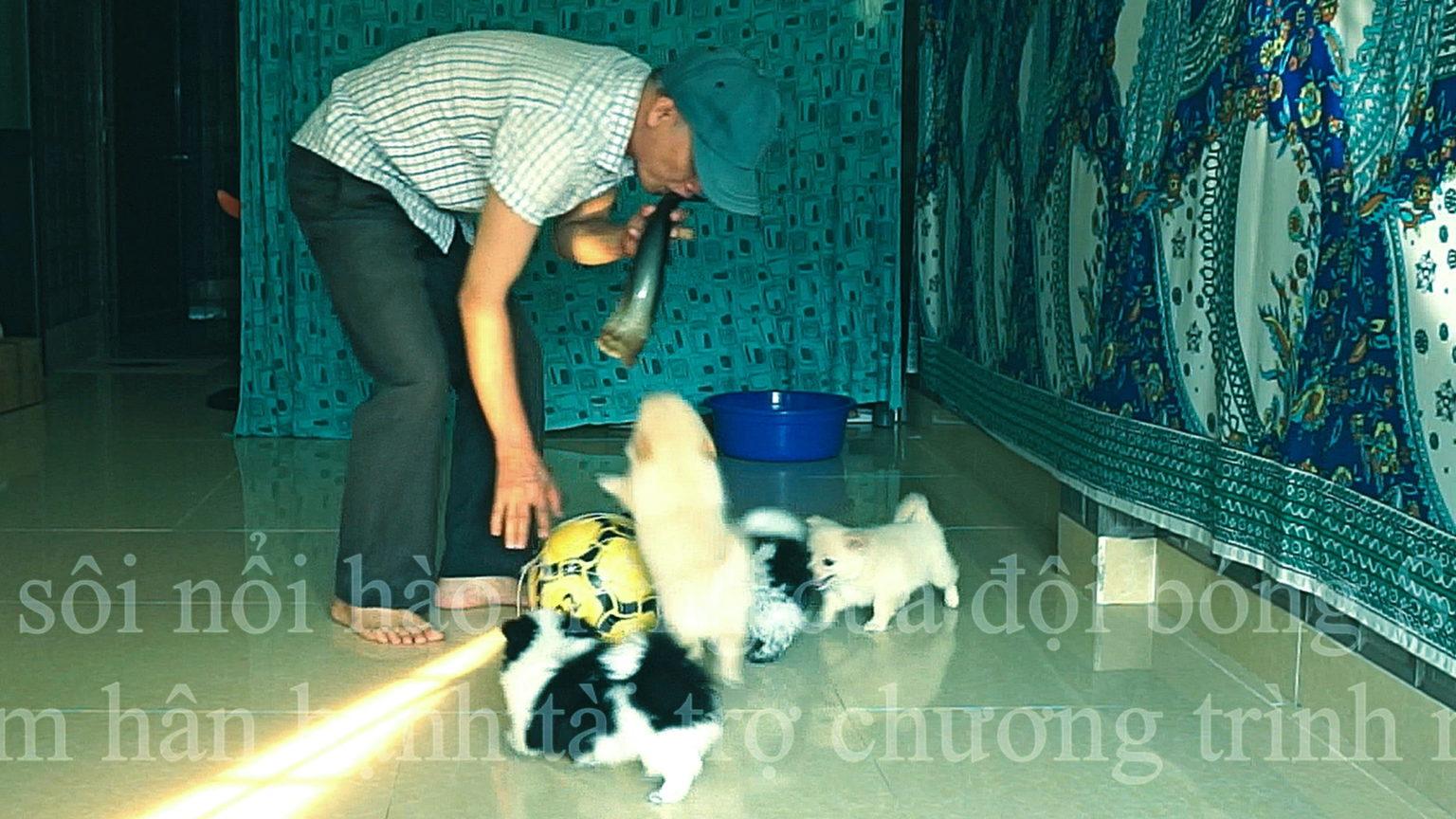 Thuốc trị ve - bọ chét - mạt trên chó: